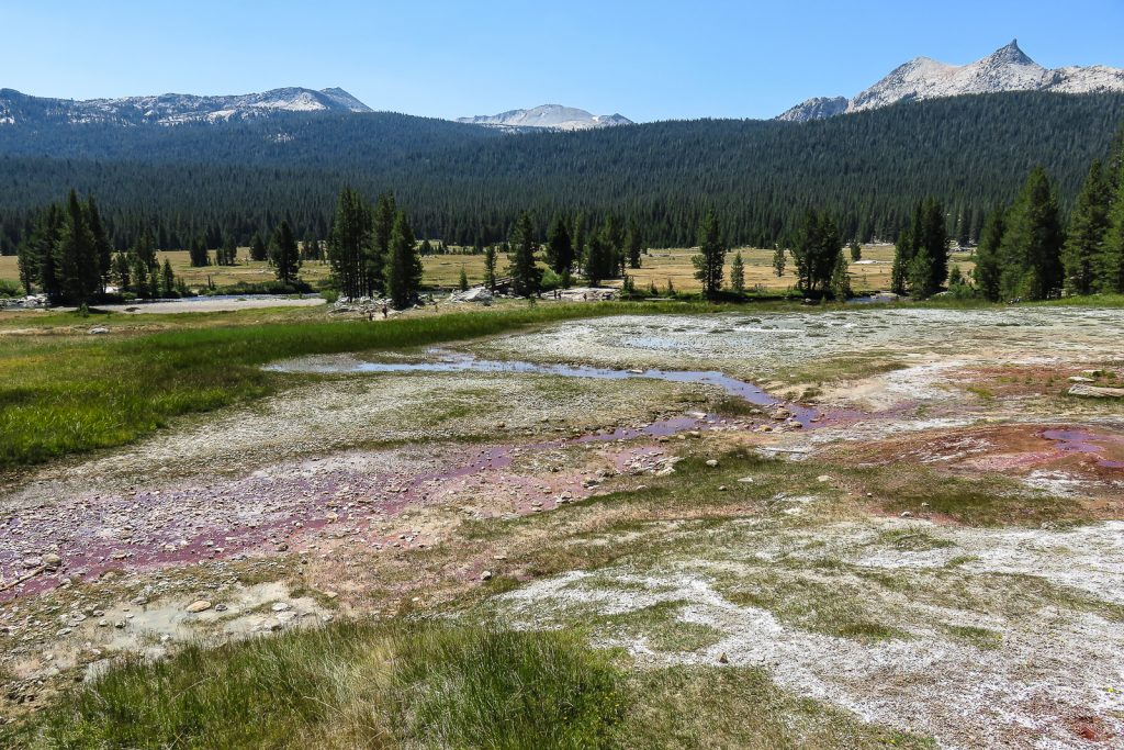 Springs at Tuolumne Meadows