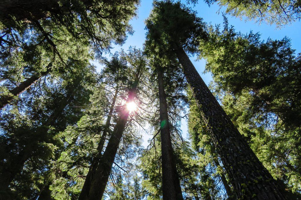 Sunlight pierces the Yosemite Forest