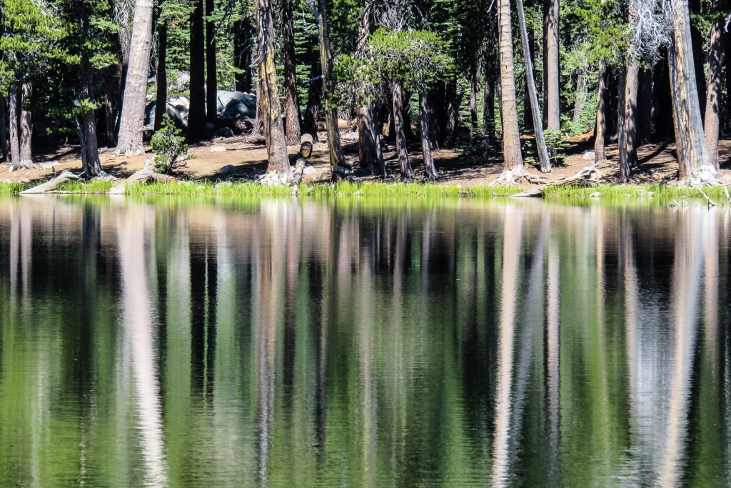 Reflections in Lukens Lake