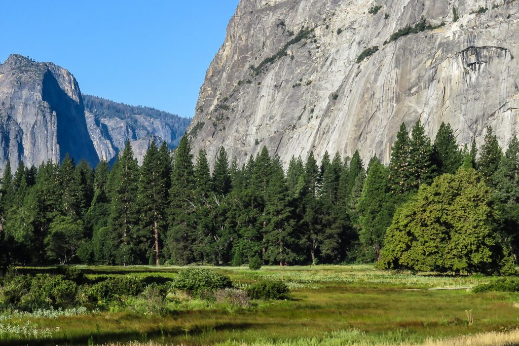 Meadow in Yosemite Valley