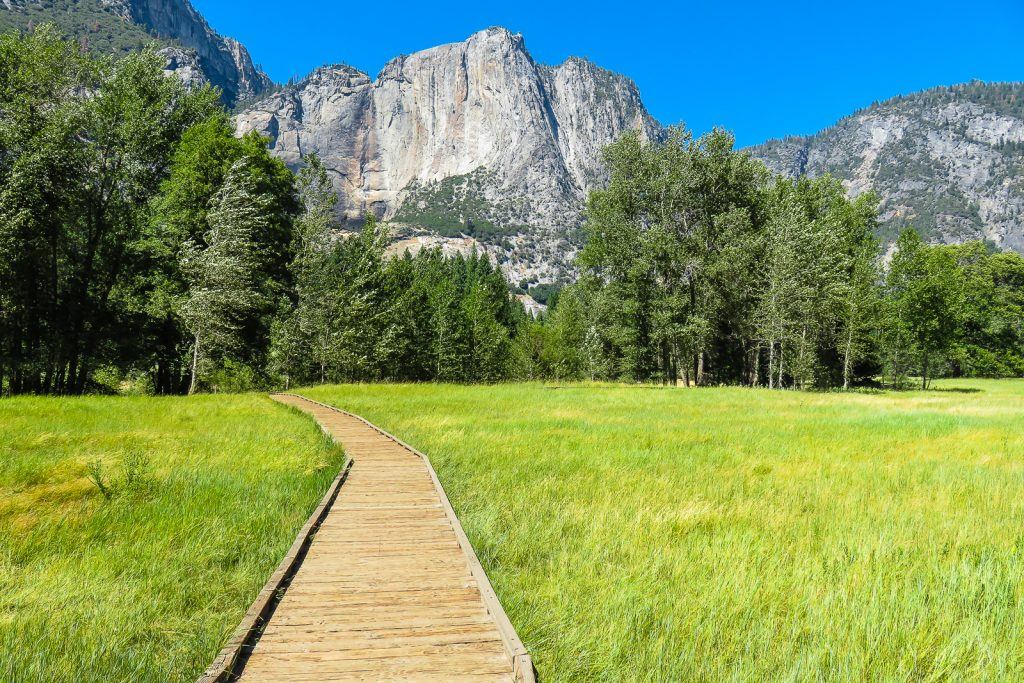 Meadow Walk in Yosemite Valley