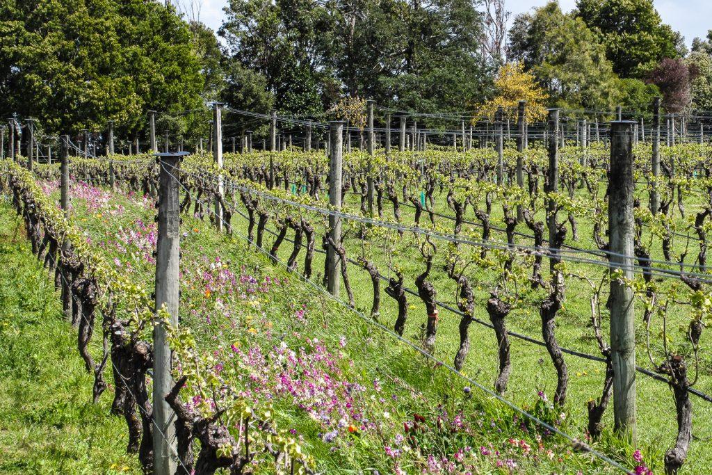 Martinborough Vineyard, sauvignon blanc, New Zealand WIne