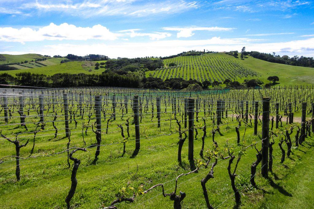 Waiheke Island Vineyard, waiheke island wineries